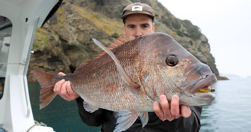 HAURAKI GULF FISHING REPORT